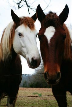 These are two of the most beautiful horses I have ever seen - Pferde - Most Beautiful Horses, All The Pretty Horses, Animals And Pets, Funny Animals, Cute Animals, Horse Photos, Horse Pictures, Beautiful Creatures, Animals Beautiful