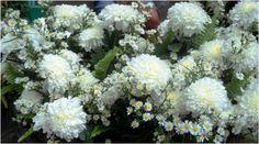 a spray of white flowers, Cebu City