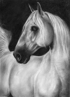 The Beauty Of Silence Print By Paula Collewijn -  The Art Of Horses