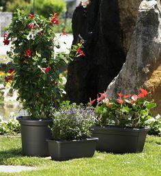 Maceta cilíndro Geo (plástico inyección) - Geo pot (polypropylene) Jardinera Akea (plástico inyección) - Akea plant box (polypropylene) Jardinera Inis (plástico inyección) - Inis plant box (polypropylene)  #decoracion#decor#home #homeandgarden#florist#floristeria #instadecor#pottery#casa#casayjardin #pot#decoration#deco#decoração#jardin#macetas #housedecor#florista#plantas#plants #plant#floreria#plantbox #jardinera#jardineria #cachepot #homedesign #gardencenter #garden #vivero…