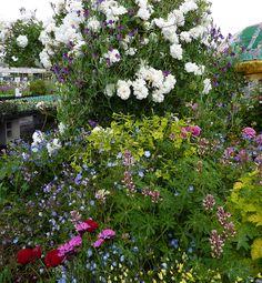 Spring garden @ Annie's Annuals
