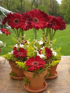 Gerbera daisy topiaries - but alternate flower colors with wedding colors.