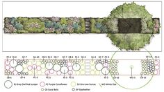 This simple design uses 5 plant species to support beauty, birds and butterflies. The plan view identifies species; the number of plants needed for each species grouping is given next to it's abbreviated name. The planted area is about 10x100ft...
