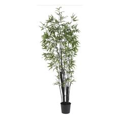 Black Bamoo Silk Tree - 2 Thick Trunks - 6.5 Feet Tall >>> Be sure to check out this awesome product.