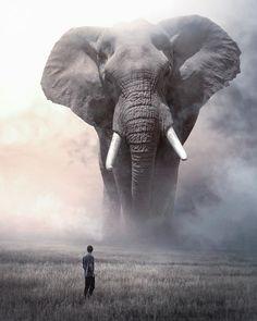 Rumore nella notte — sosuperawesome: Ebenism on. Elephant Photography, Animal Photography, Nature Photography, Giant Animals, Big Animals, Wildlife Conservation, Wildlife Art, Image Lion, Bull Elephant