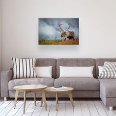 Would you agree Caribou is a stunning print? Available 50% Off with Free Shipping! Order here >>>http://ift.tt/2gBvor8 #elkhunting #thecanadiancollective #fingerprintofgod #britishcolumbia #bc #countrygirl #worldcaptures #discoveron #liveoutdoors #nature_cuties #wildlife_in_bl #worldshotz #loves_canada #naturegeography #huntress #wildgeography #greatnorthcollective #animalplanet #adventureculture #adventurethatislife #ipulledoverforthis #girlswhohunt #canada #natgeocreative #yourshot…