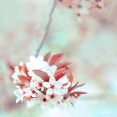 Sakura 7 by *nabi4 on deviantART