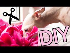 21 besten tipps f r die reise mit hund bilder auf pinterest tipps hunde und haustiere. Black Bedroom Furniture Sets. Home Design Ideas