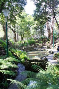 Royal Botanical Gardens Melbourne, Melbourne, Australia — by Paula Norton - - Fern Gully was an amazing spot. The Melbourne Royal Botanical Gardens are vast and spread over a large area. Many neat trees, beautiful. Melbourne Victoria, Victoria Australia, Melbourne Australia, Australia Travel, Brisbane, Australia Shopping, Australia 2017, Kew Gardens, Botanical Gardens