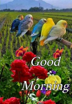Gud Morning Images, Good Morning Flowers Gif, Beautiful Morning Messages, Good Morning Beautiful Images, Good Morning Photos, Good Morning Messages, Morning Pictures, Beautiful Gif, Beautiful Birds