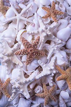 Orange And White Starfish Pink Beach and Shells Pearl Wallpaper, Ocean Wallpaper, Summer Wallpaper, Iphone Background Wallpaper, Colorful Wallpaper, Aesthetic Iphone Wallpaper, Flower Wallpaper, Aesthetic Wallpapers, Phone Backgrounds