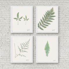 This listing is for a set of 4 fern prints. The set includes the following: Lady Fern Giant Chain Fern Maidenhair Fern Cliffbrake Fern   I collected all of the original plants in various locations in both northern and southern California.  The prints are created from high resolution scans of the real pressed plants. Original specimens were mounted on 11 X 14 herbarium paper. This set is available in the 11 X 14 size, or a smaller 8 X 10 size. I hand sign and letter the name of each fern in…