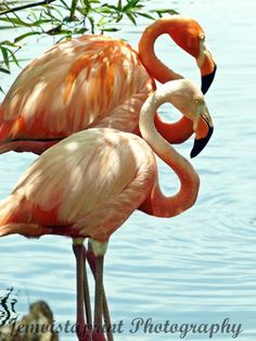 Pink Flamingos Art Print Wall Decor Punta Cana by jemvistaprint, $25.00