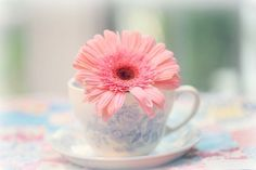 Bild über We Heart It https://weheartit.com/entry/154345284 #Cookies #cupcakes #macarons #pasta #pastel #shabbychic #vintage #d{reem}z..xoxoxo