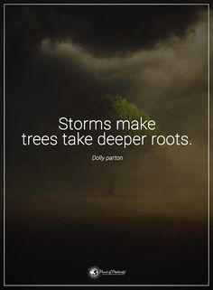 Storms make trees ta