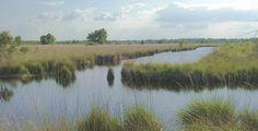 Veenvlakte in de Peel