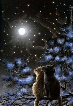 Vois- tu les étoiles...elles sont les signes astrologiques des chats comme pour les humains.
