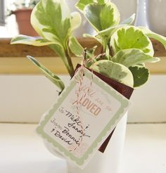 planted mugs + printable tags