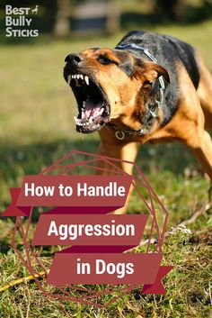 Is your dog's barking and biting a problem? Do they fight with other dogs? Learn how to read the signs of your dog's aggression and improve their behavior. Training Your Puppy, Dog Training Tips, Bully Sticks, Dog Barking, Dog Agility, Dog Behavior, Dog Care, Best Dogs