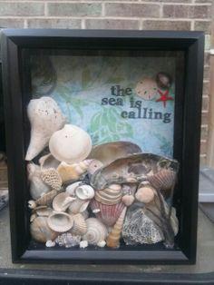 Shadow box sea shell display