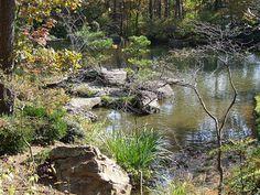 Garden of the Pine Wind Arkansas Mountains, Pine, Explore, Places, Water, Garden, Outdoor, Pine Tree, Gripe Water