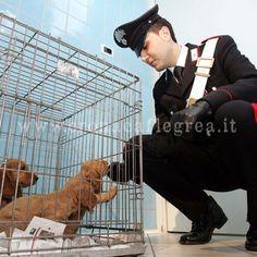 AMICI ANIMALI/ Il traffico degli animali e i falsi volontari - Sfruttati anche dai sedicenti amici di animali...che schifo!!! Vi suggerisco di seguire i consigli per evitare di essere complici di traffici illeciti e crudeli!