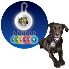 Paws for Life (TM) Pet Safety Light. Make your pet visible to yourself and others when you light your pet's path with this great light.