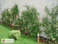 O gradina pentru sufletul tau... Private Garden, Gardens, Outdoor Structures, Outdoor Gardens, Garden, House Gardens