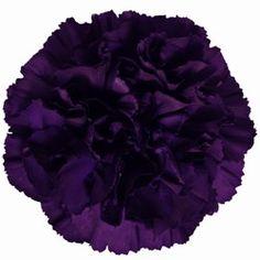 Eggplant carnation...flower girl and ring bearer