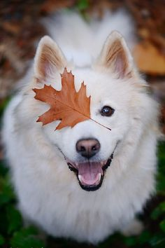 autumn love story | by: { Schneepfote } ♡... Re-pin by StoneArtUSA.com ~ affordable custom pet memorials for everyone.