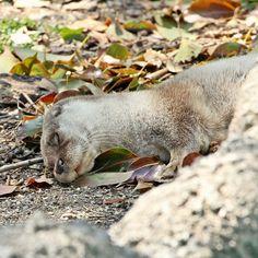 Otter Sleeps Among the Leaves - April 26, 2012