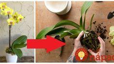 Nenechávajte ju v črepníku, toto vyzerá úžasne: Pestovateľ ukázal úžasný nápad, ako pestovať orchideu – teraz vyzerá ako z výstavy!