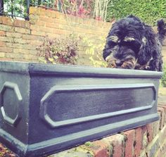 Poppy checking out our slatefibre boxes!