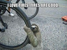 Sloths apparently love tires