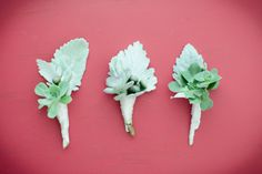 sweet lambs ear and succulent boutonnieres   Theo Milo