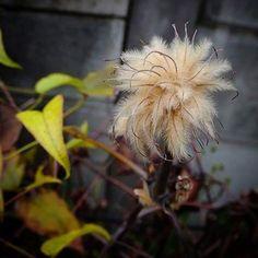 鳥に憧れる草。 いつか飛べるだろか。   #bird #flower #鳥 #花