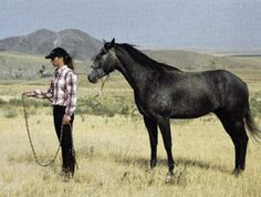 Training a horse to lead lightly will teach him how to move with your body From AQHAs Fundamentals of Horsemanship