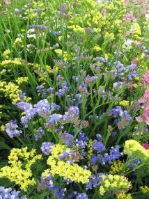 12 Fab Filler Flowers for Wedding Arrangements: Limonium
