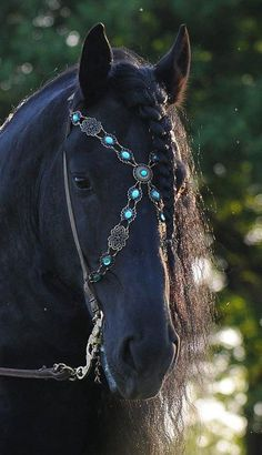 6a36aa0e beautiful Horse Bridle, Friesian Horse, Bling Horse Tack, Dressage Bridle,  Dressage Horses