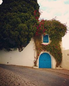 t-u-n-i-s-i-e: Sidi Bou Said - Tunisia By Ahmed Ben Cheikh Sidi Bou Said, Arabian Nights, Travel Photography, Plants, Beautiful, Plant, Planets, Travel Photos