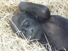 baby by belgianchocolate, via Flickr