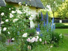 English Garden on Pinterest English Country Gardens