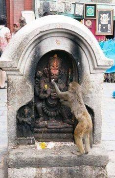 India, Culture, Monkey in the Temple, Hare Krishna, Krishna Art, Lord Ganesha Paintings, Lord Shiva Painting, Hanuman Images, Lord Krishna Images, Lord Hanuman Wallpapers, Shri Hanuman, Durga Maa