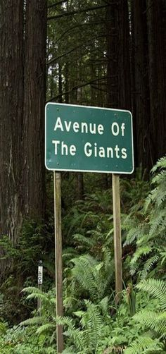 Avenue of the Giants, Redwoods, California by Steven Bley