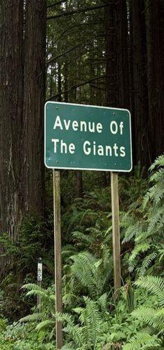 Avenue of the Giants - California