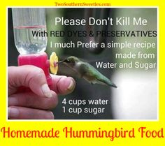 Stop wasting your money and buying those red hummingbird foods at the store. They are actually BAD for the birds. Here is a homemade mix that they absolutely love Funny Inspirational Quotes, Uplifting Quotes, Inspiring Quotes About Life, Positive Quotes, Crow Spirit Animal, Homemade Hummingbird Food, Girl Qoutes, Hummingbird Nectar, Bff