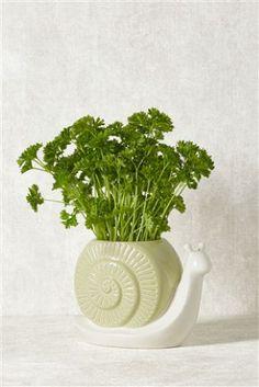 Ceramic Snail Plant Pot