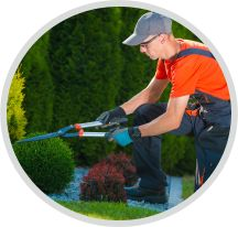 Sträucher schneiden, Strauchschnitt und Pflege Garden Care, Plants