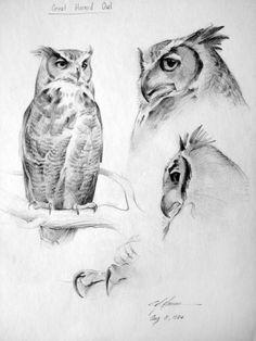 Esboço da grande coruja orelhuda. Nathan Greene.