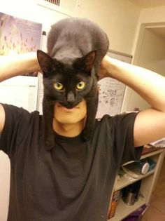 If Cat Woman and Batman Got Together. - LOLcats is the best place to find and submit funny cat memes and other silly cat materials to share with the world. We find the funny cats that make you LOL so that you don't have to. Crazy Cat Lady, Crazy Cats, I Love Cats, Cute Cats, Funny Cute, Hilarious, Funny Memes, Funny Pranks, Tierischer Humor